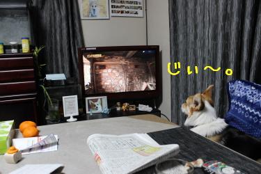 テレビに釘付け