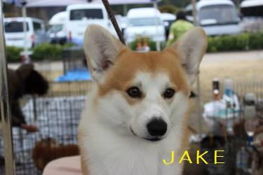 JAKEくん