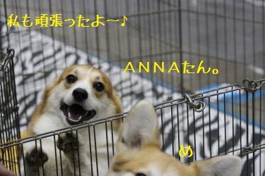 ANNAたん。