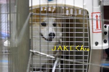 JAKE坊っちゃま