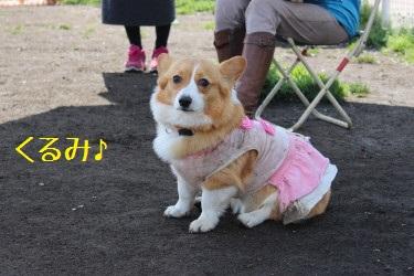 くるみちゃん
