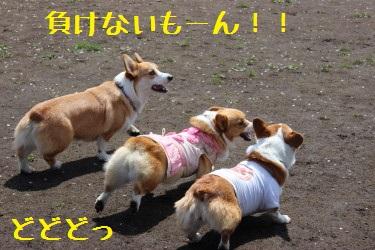 負けないーー!!