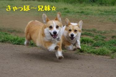 飛行兄妹♪
