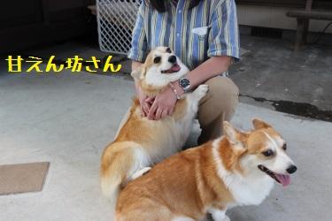 甘えん坊ソフィちゃん