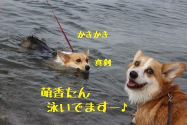 泳いでますー。