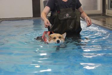 泳がされたでちゅ。