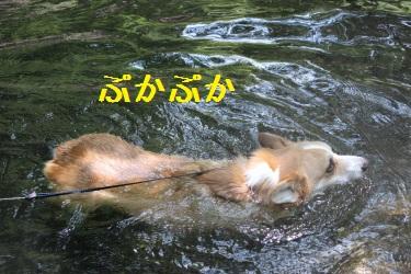 コギの川流れ