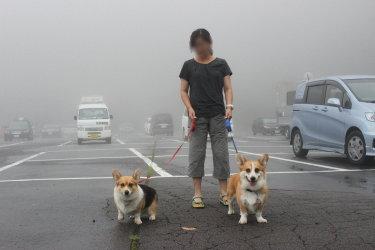 霧がすごすぎ。