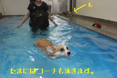 たまにはコーチも泳ぐ。