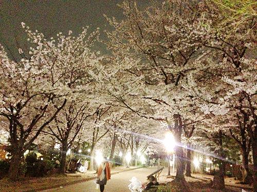 写真 2014-04-02 19 52 26