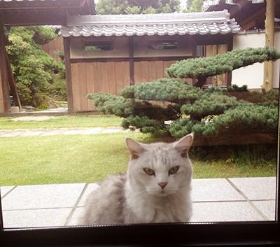 写真 2014-09-01 19 44 46(1)