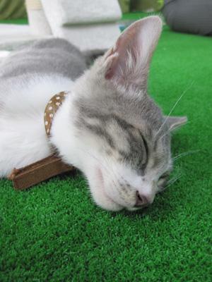 猫カフェ 1