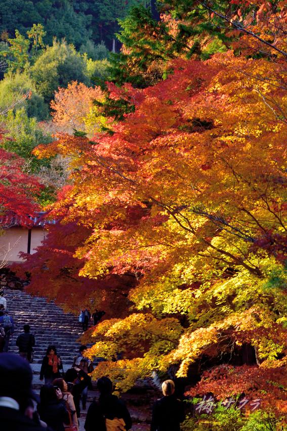 京都15(3)変更済