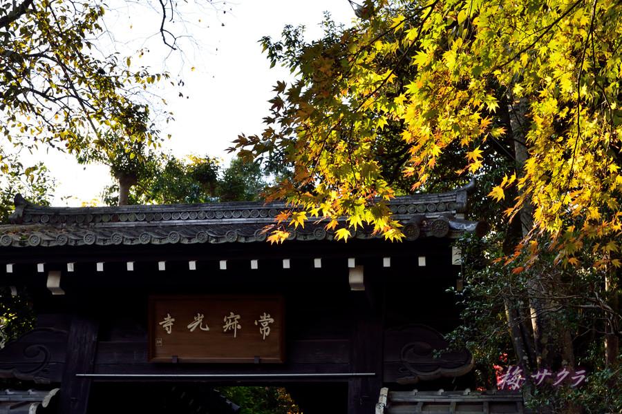 京都16(1)変更済
