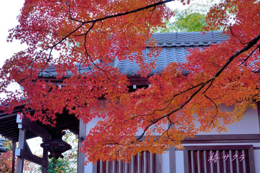 京都16(5)変更済