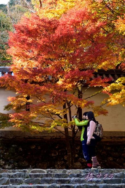 京都18(11-1)変更済