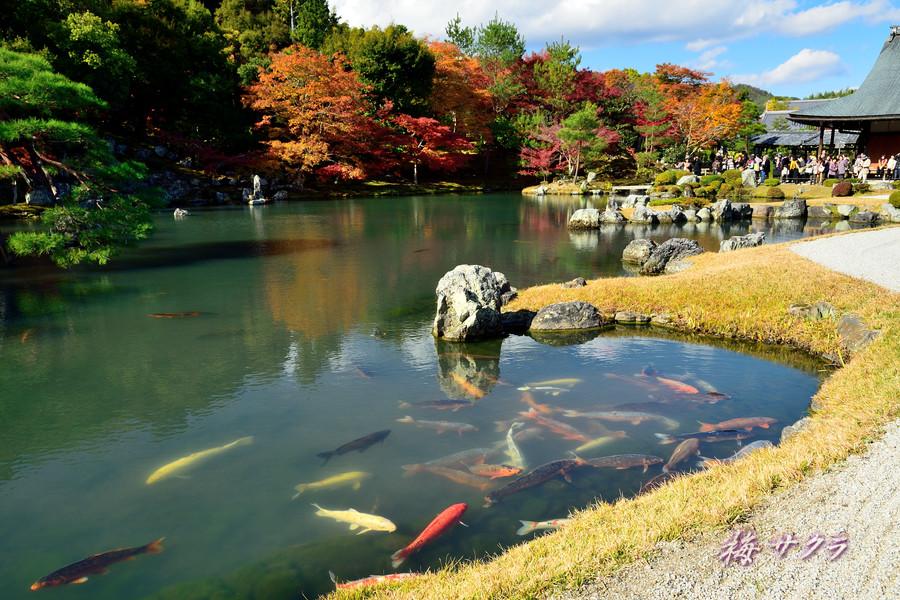 京都18(5)変更済