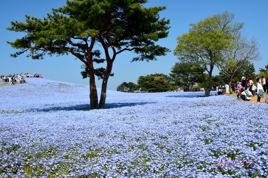ひたち海浜公園2(2)変更済