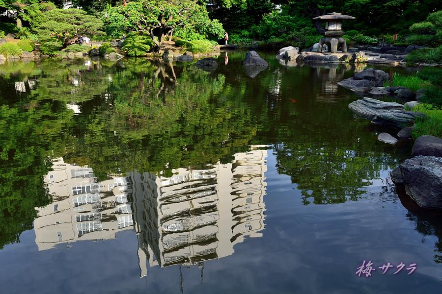 旧古河庭園3(3変更済