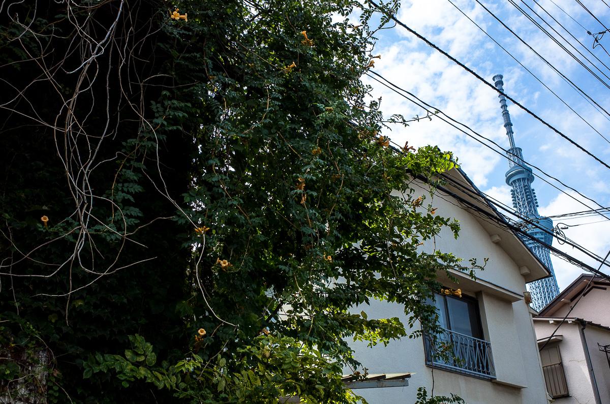140813押上文化京島-1-24