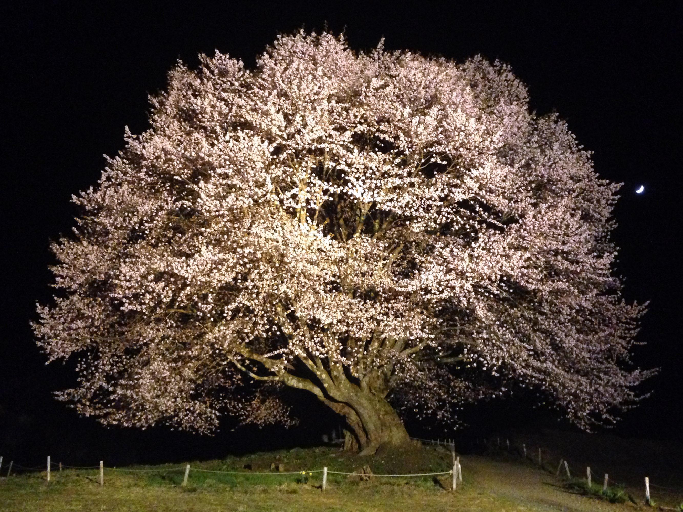 20140503 片品村 「夜の天王桜」撮影 遠藤夕幻