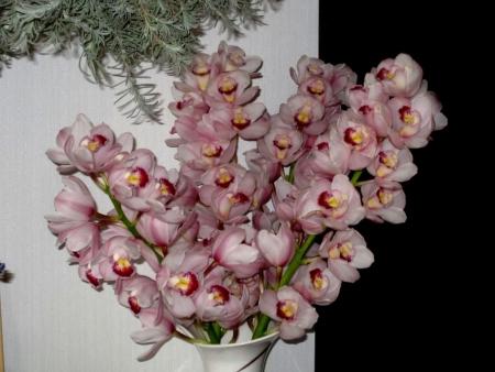 tnH26-02-28切り花のシンビジウム (4)