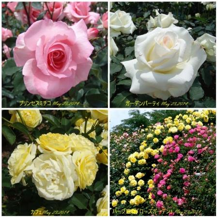 tnH26-05-23ハーブ庭園のバラ4種 (5)