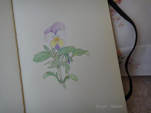flower1404132.jpg