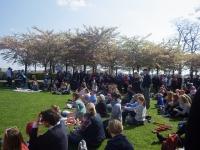 桜フェスティバル2