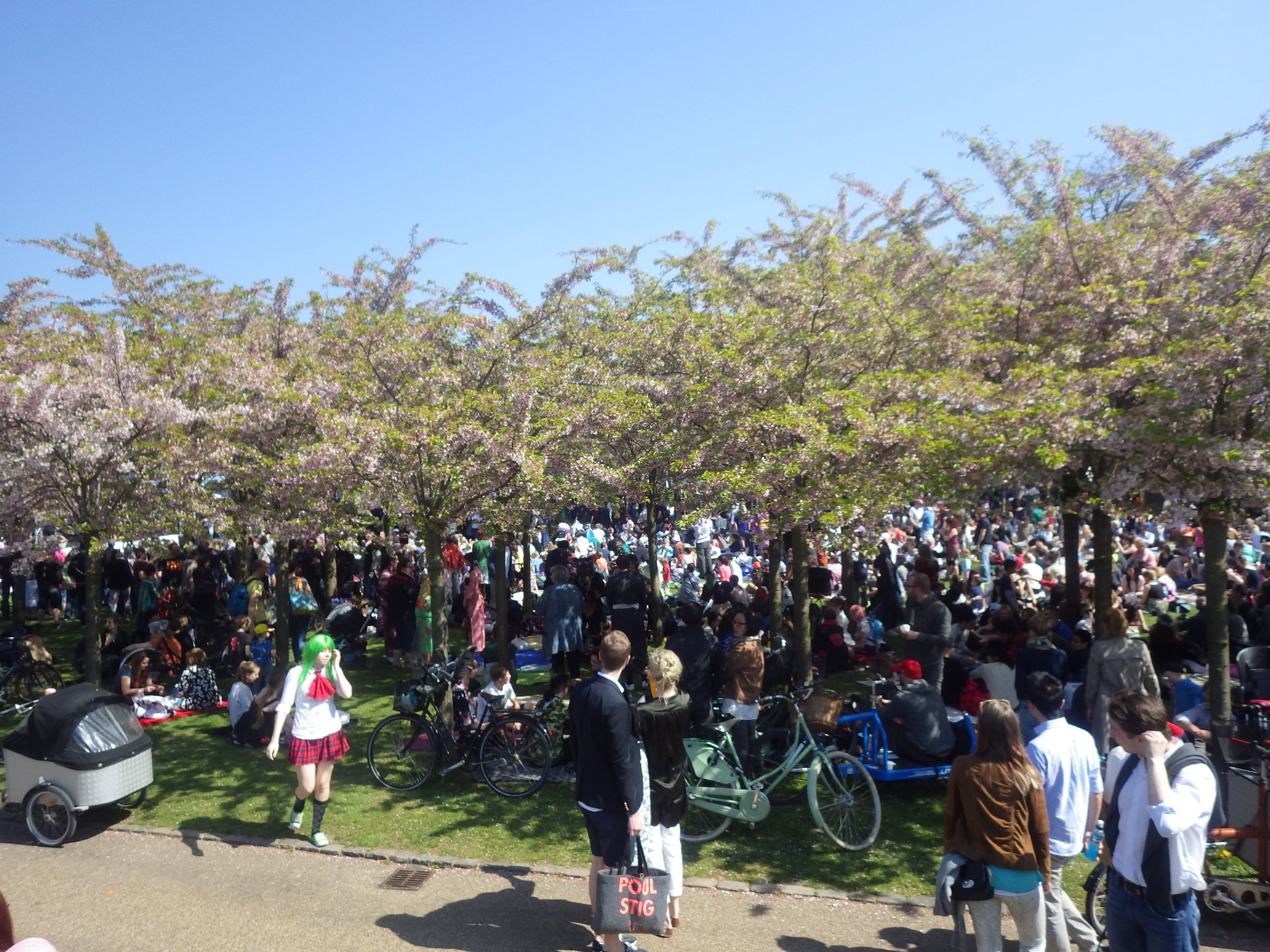桜フェスティバル17