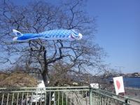 桜フェスティバル24