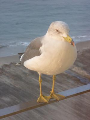 2013.11.4鳥1