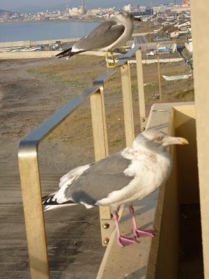 2013.11.4鳥2