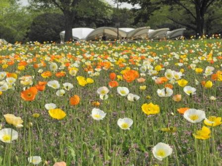 昭和記念公園4