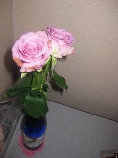 pinkrose20140708.jpg