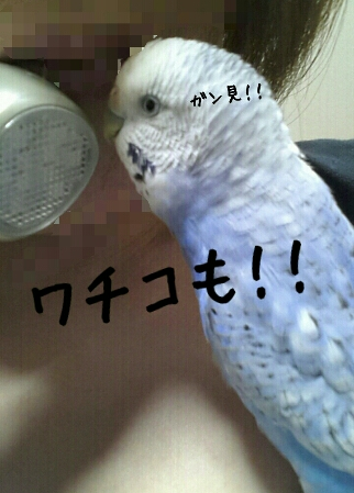 fc2_2014-04-23_22-59-35-164.jpg