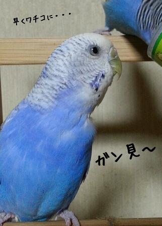 fc2_2014-04-23_23-02-45-474.jpg