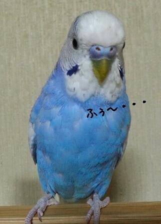 fc2_2014-04-29_22-44-10-859.jpg