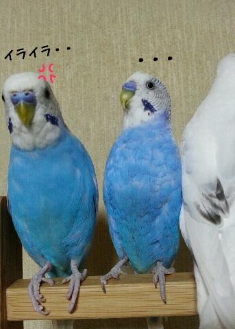 fc2_2014-08-23_01-14-56-391.jpg