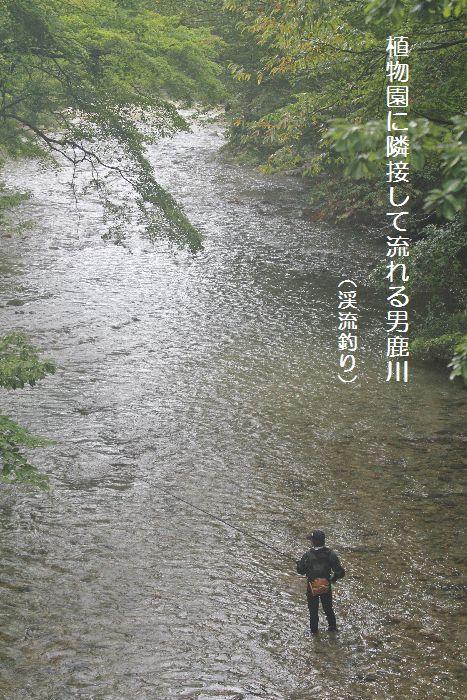 隣接して流れる男鹿川