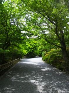 竜安寺の散策路