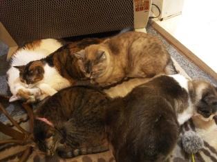 201405猫カフェ1