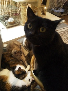 201405猫カフェ2