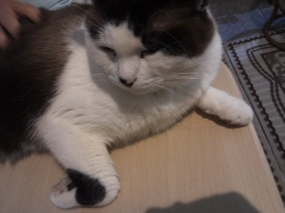 201405猫カフェ6