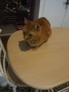 201405猫カフェ7