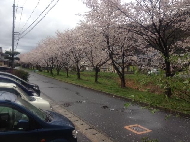 鳥取写真2
