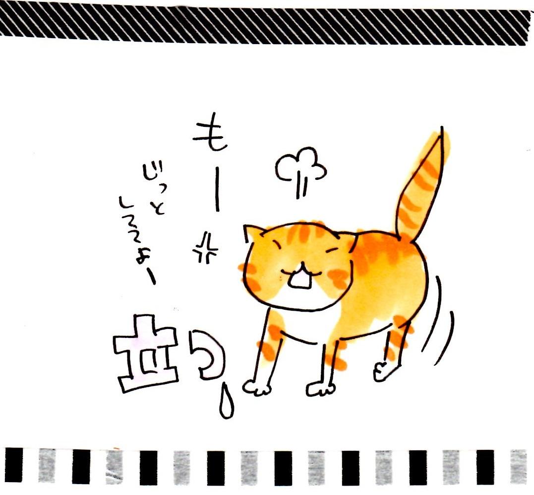 tongari12.jpg