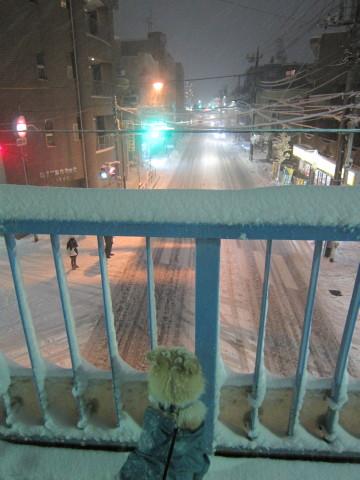 h26,2また大雪ー夜散歩
