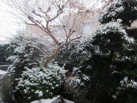 h26,2また大雪ー朝