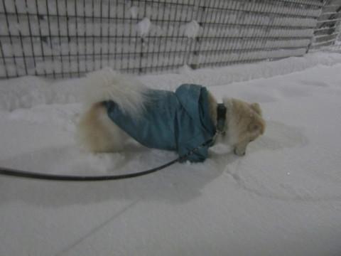 h26,2また大雪ー深夜